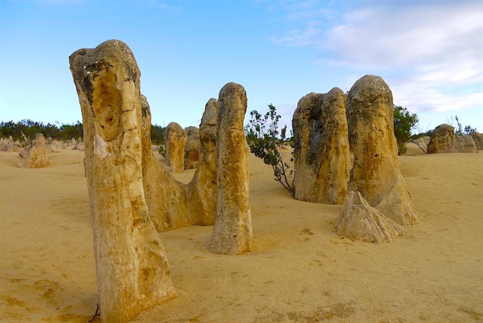 Kalksteinsäulen - Nambung National Park - Western Australia