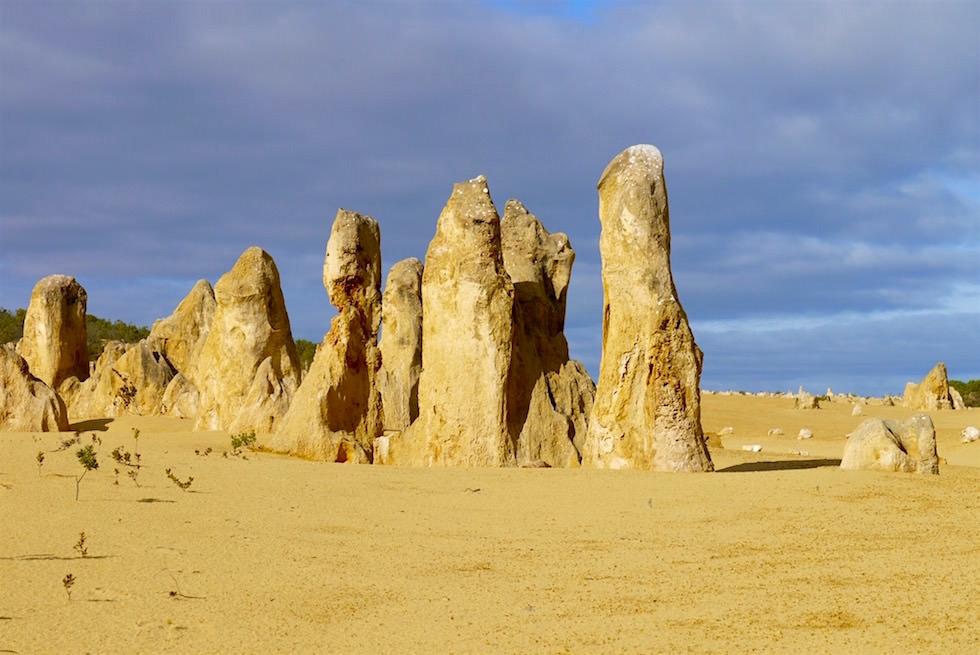 Versteinerte Soldaten - Pinnacles Desert im Nambung National Park - Western Australia