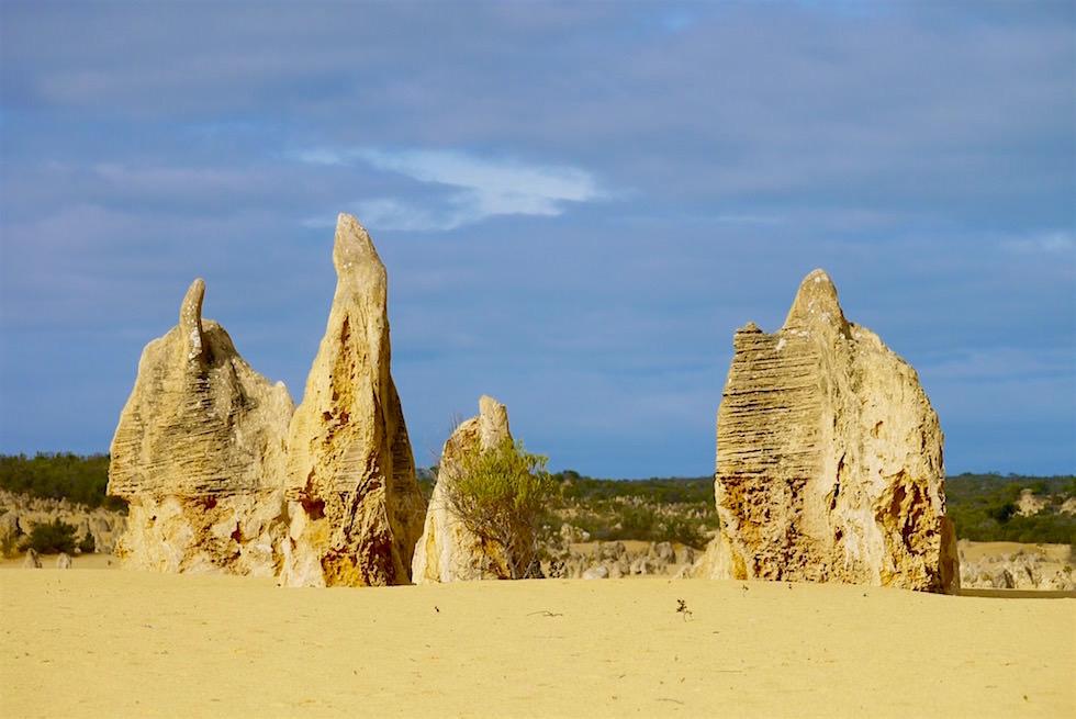 Bizarre Kalksteinsäulen - Pinnacles Desert - Western Australia