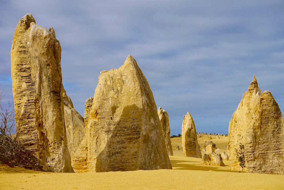 Steinsäulen Wald - Pinnacles - Nambung National Park