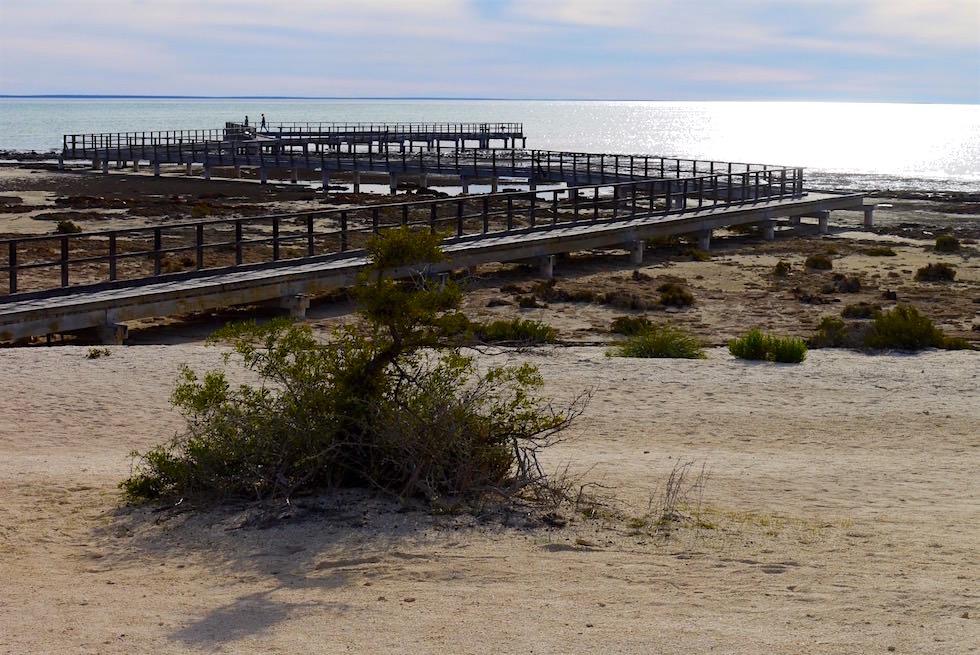 Boardwalk bei Sonnenuntergang - Hamelin Pool - Shark Bay - Western Australia
