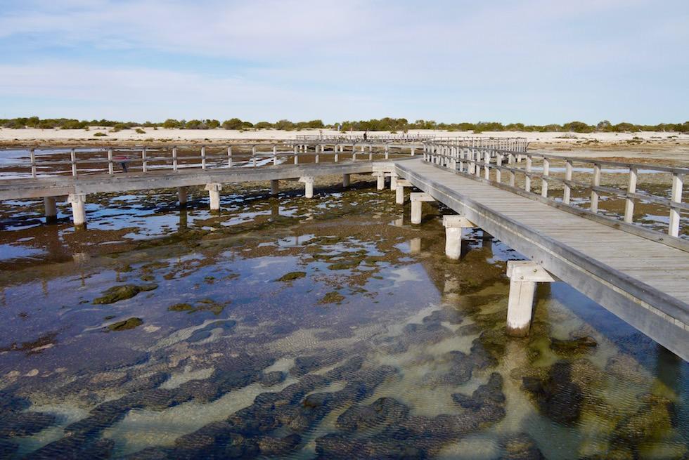 Cyanobakterien Matten - Hamelin Pool - Western Australia