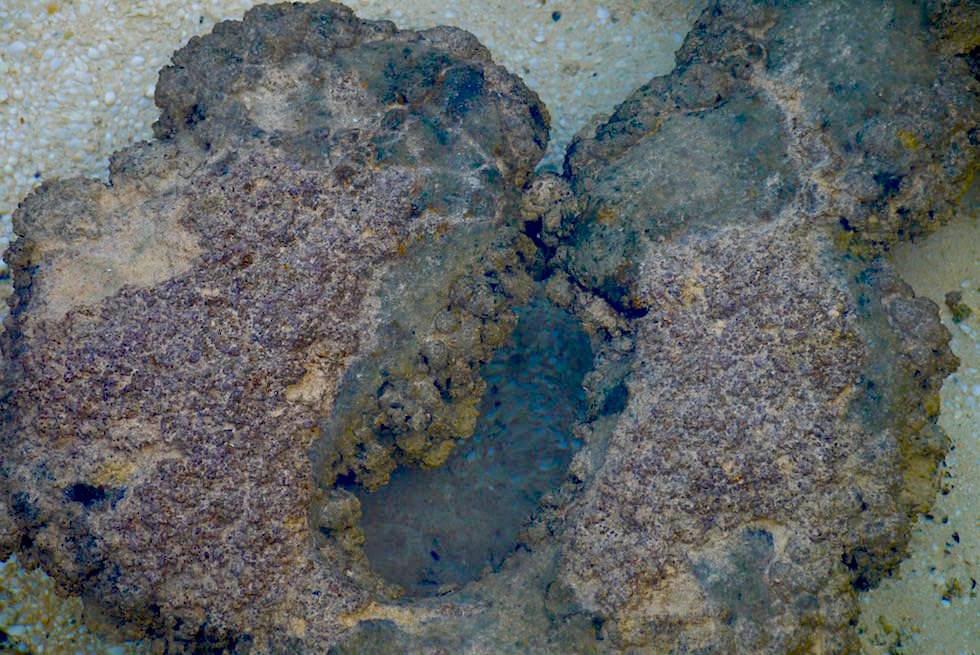 Biofilme - Matten - Stromatolithen bei Hamelin Pool - Western Australia