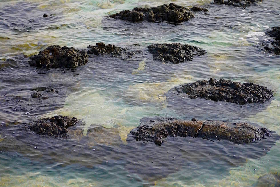 Stromatolithen - vom Steg in Hamelin Pool - Shark Bay - Western Australia