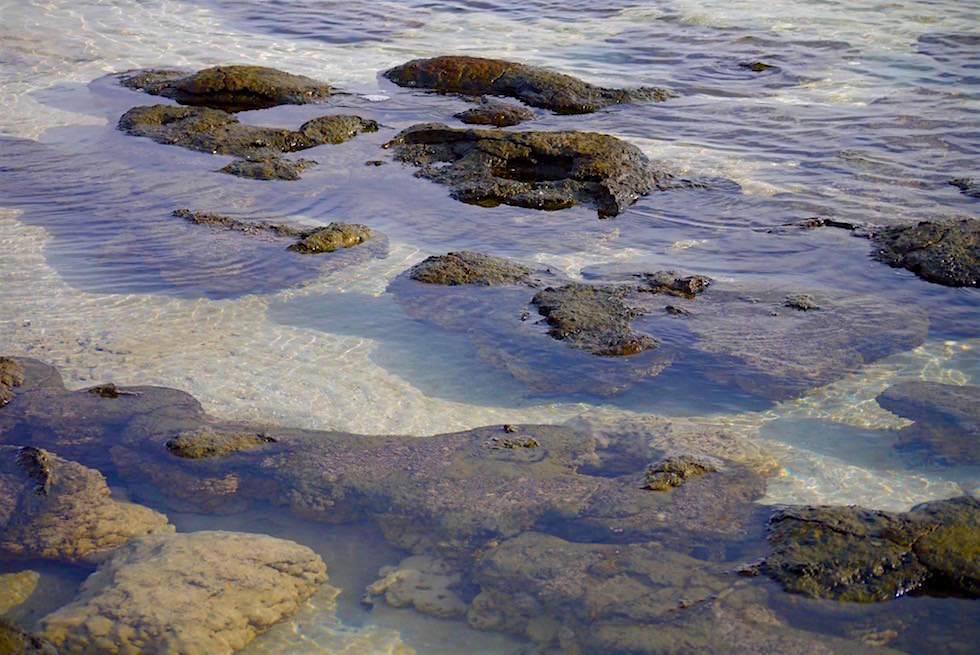 Cyanobakterien - Biofilme - Hamelin Pool - Western Australia