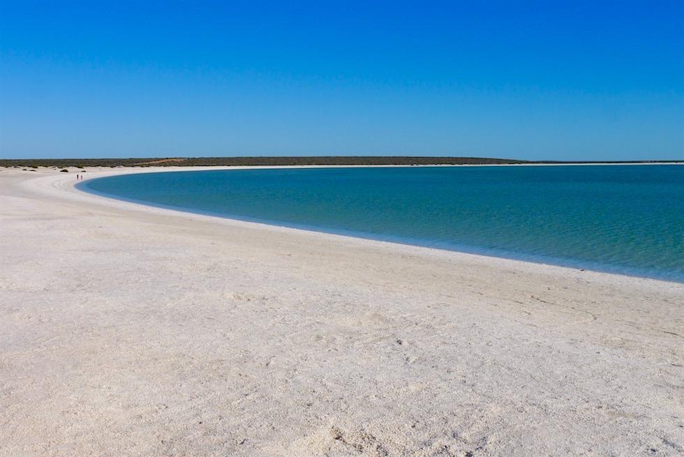 Shell Beach - Strand - Hamelin Pool - Western Australia