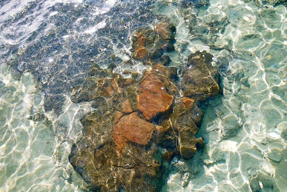 Rostrote Stromatolithen - Hamelin Pool - Shark Bay - Western Australia