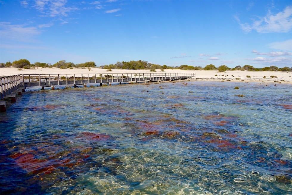 Blick zurück - Steg Hamelin Pool - Western Australia