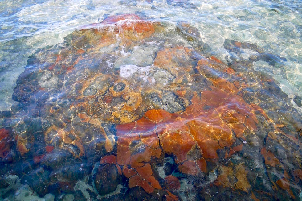 Red-Caped Domes - Stromatolithen Struktur in Hamelin Pool- Western Australia