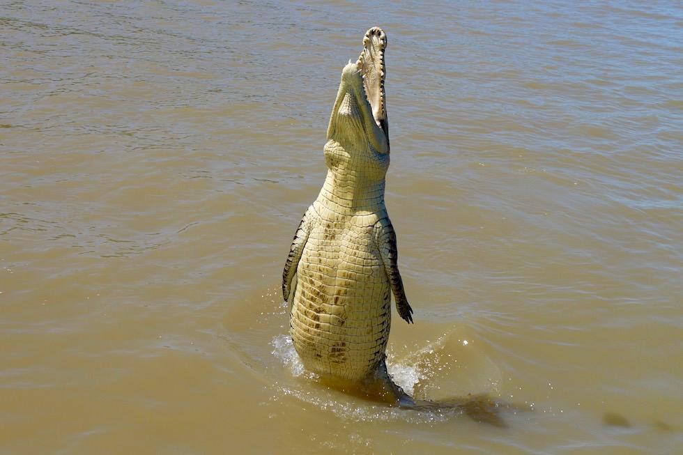 Atemberaubende Krokodilsprünge - Spectacular Jumping Crocodile - Northern Territory