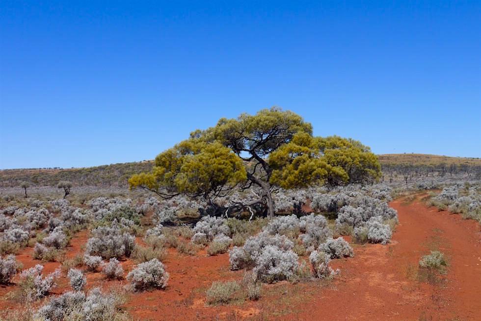 Wunderschönes Outback - Lake Gairdner und Grawler Ranges - South Australia
