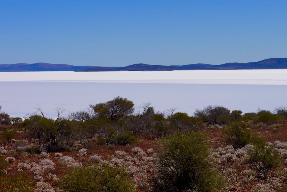 Farbkontraste: rot, braun, grünes Ufer & strahlend weißer See - Lake Gairdner - South Australia
