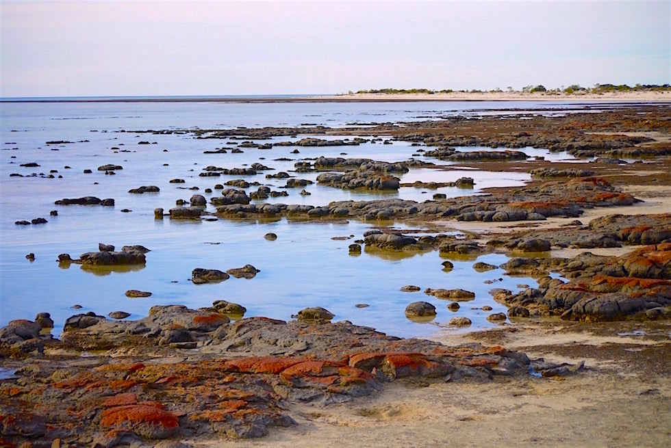 Blick auf Stromatolithen - Hamelin Pool - Western Australia