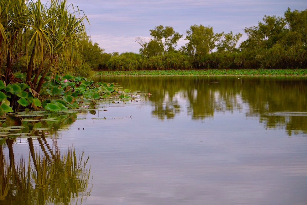 Wasserwege - Corroboree Billabong & Wetland Cruises -Northern Territory