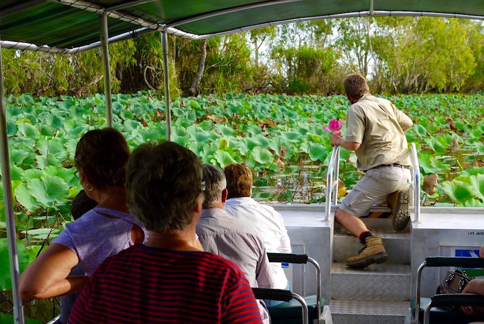 Wetland Cruises - Corroboree Billabong - Northern Territory