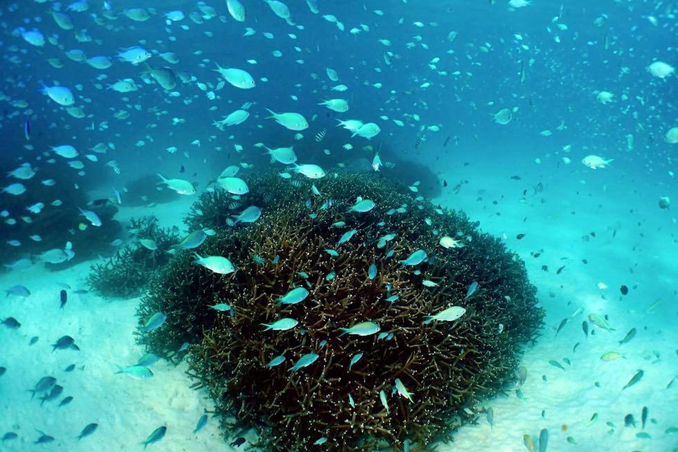 """The Aquarium"" wunderschöner Schnorchel Spot - Skeleton Bay bei Coral Bay - Ningaloo Reef - Western Australia"