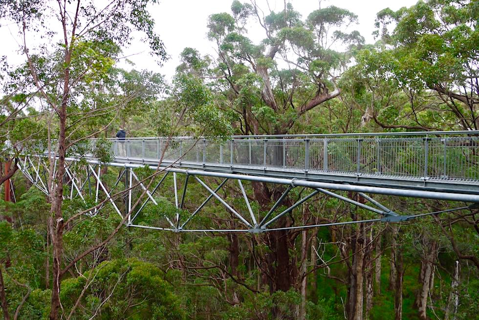 Stahlbrücke Konstruktion - Giant Valley Tree Top Walk - Western Australia