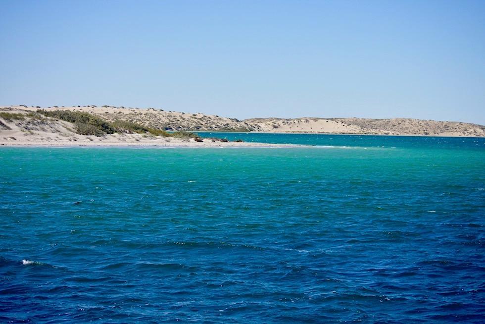 Schnorcheln mit Mantas Tour - Ningaloo Reef & Coral Coast bei Coral Bay - Western Austalia