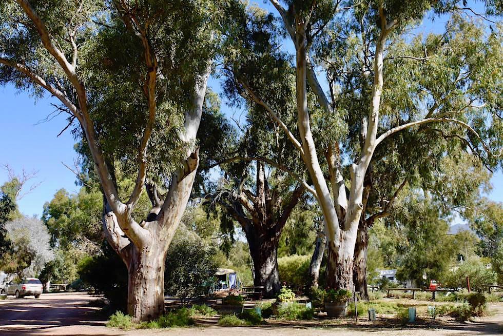Wunderschöner Öko Caravan Park - Quorn Caravan Park - South Australia