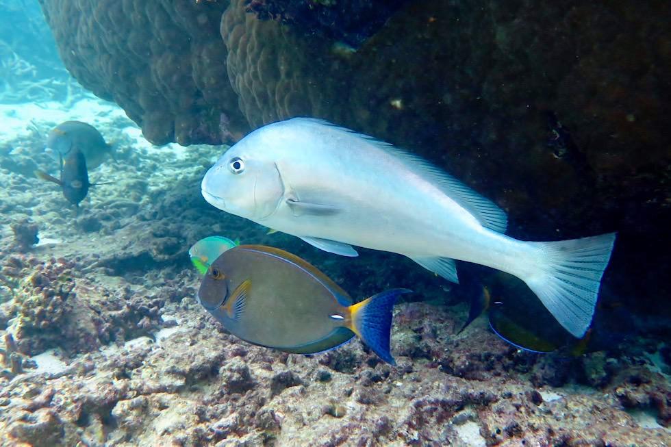 Schnorcheln an der Skeleton Bay - Ningaloo Reef bei Coral Bay - Western Australia