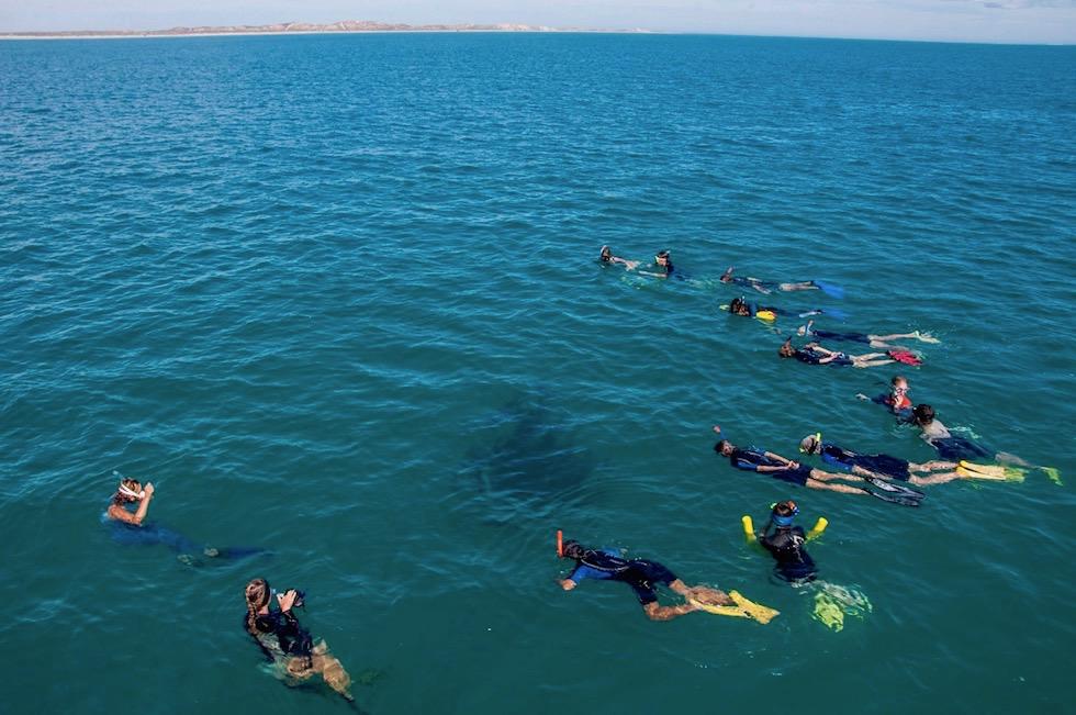 Schnorcheln mit Mantas - Coastal Adventures Tour in Coral Bay - Western Australia