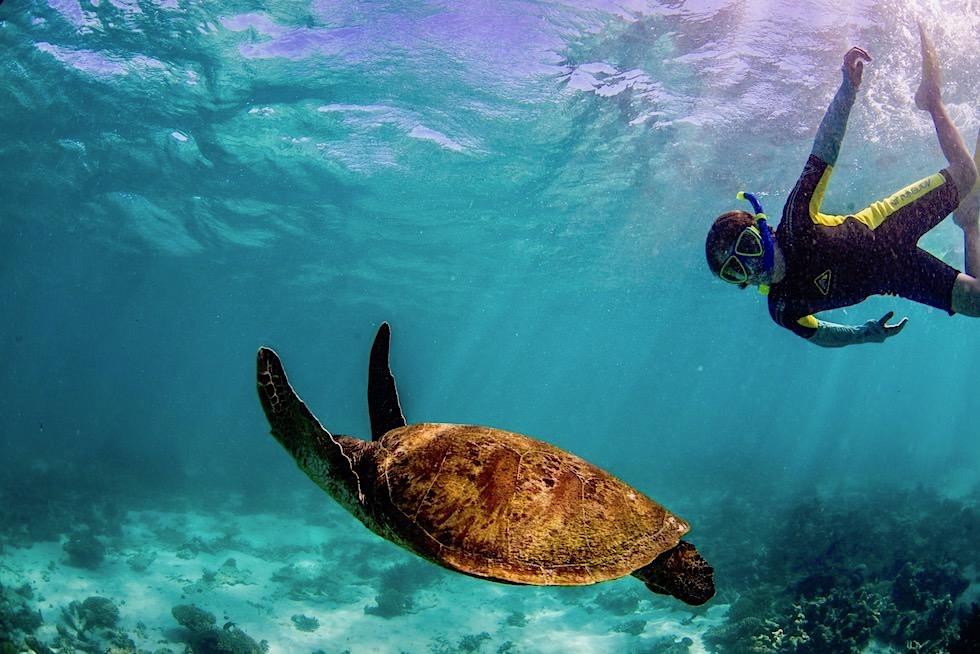 Schnorcheln mit Mantas - Green Turtle oder Suppenschildkröte - Ningaloo Reef bei Coral Bay - Western Australia