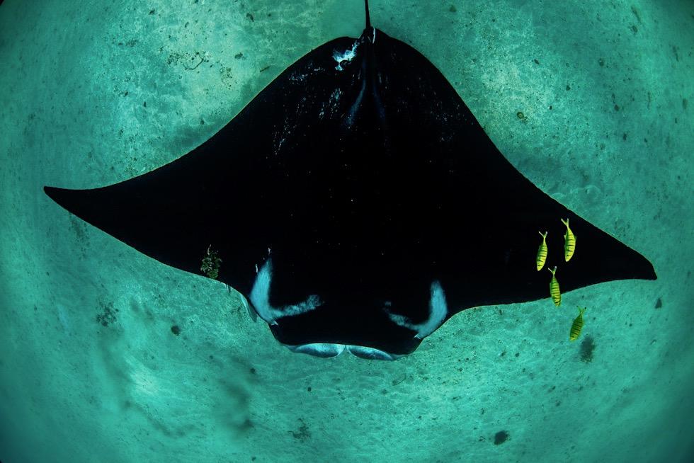 Schnorcheln mit Mantas - Ningaloo Reef an der Coral Coast - Coastal Adventure Tours in Coral Bay - Western Australia