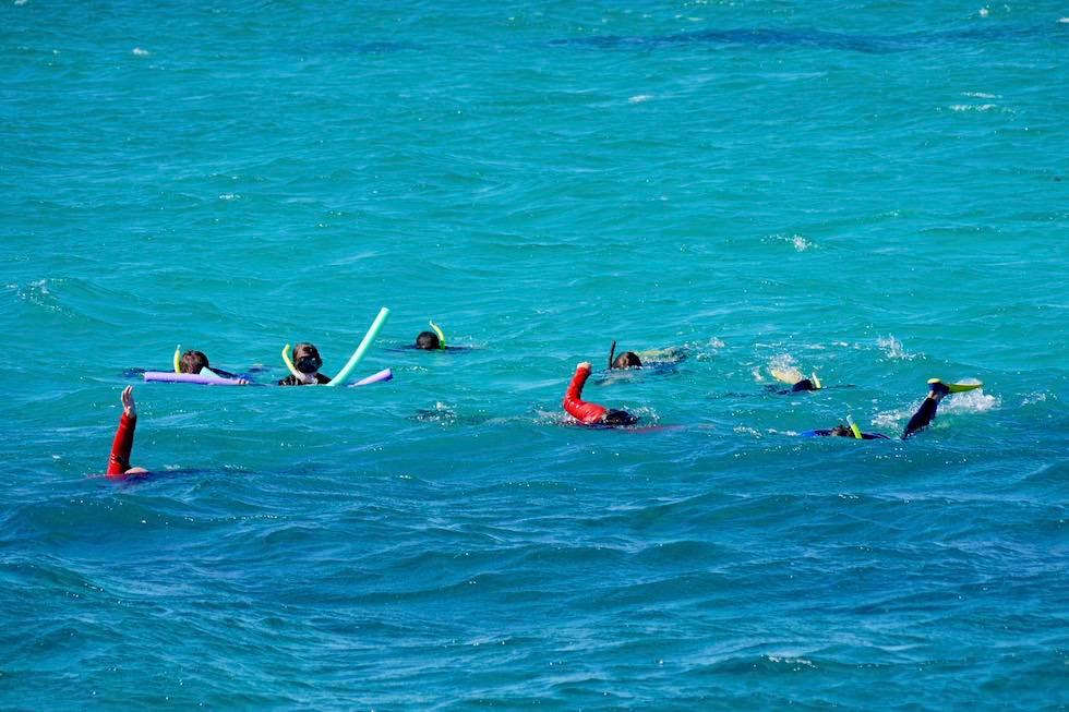 Schnorcheln mit Mantas - Ningaloo Reef - Western Australia