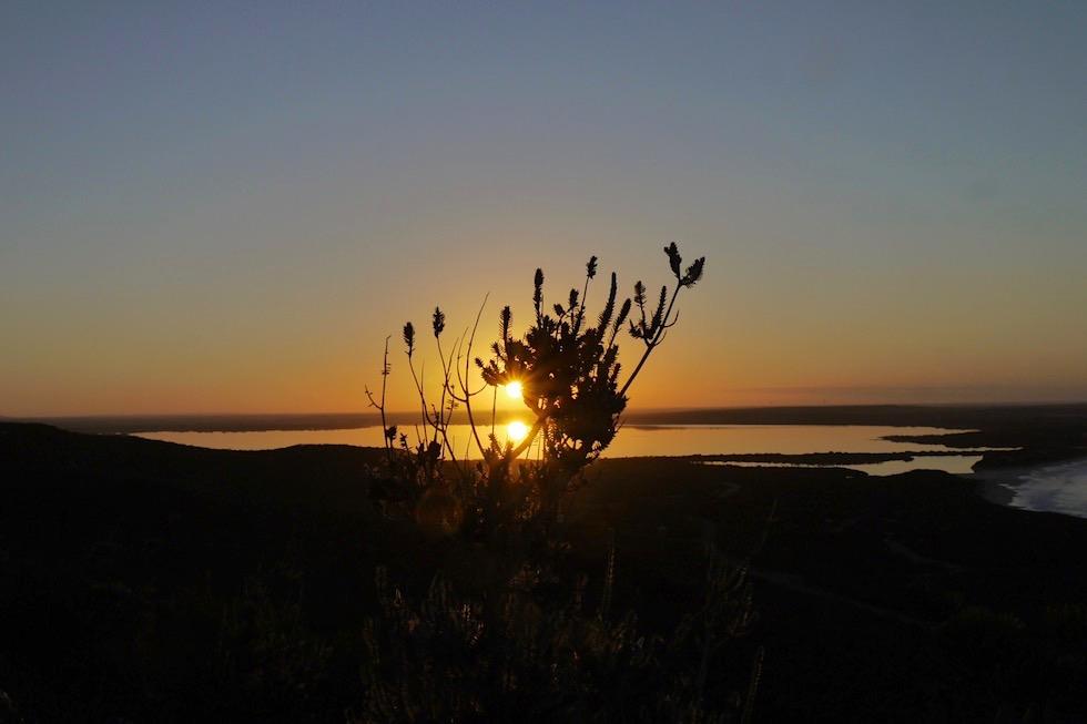 Sonnenaufgang - Sonne im Strauch - Culham Inlet im Fitzgerald River National Park - Western Australia