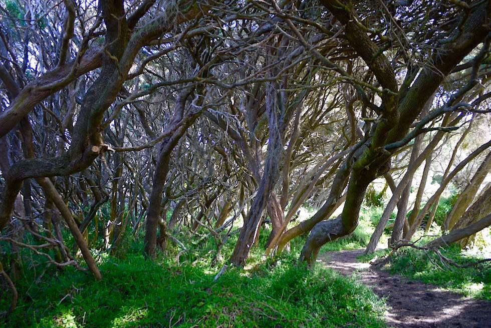 Wunderschöner Spazierweg am Wooley Lake in Beachport - South Australia