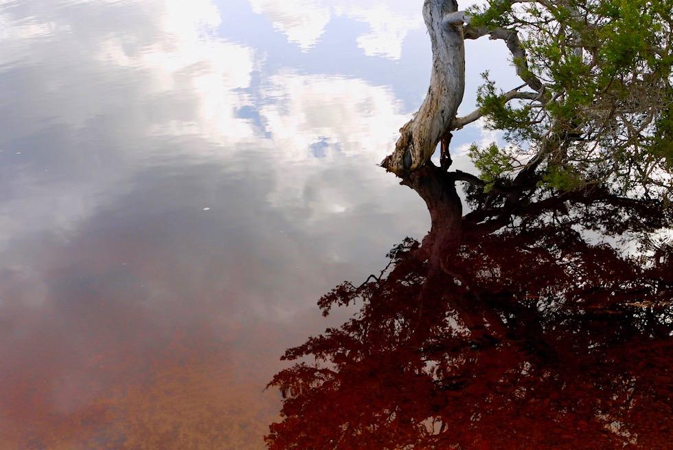 Zauberschöne Spiegelungen Hamsley Inlet - Fitzgerald River National Park - Western Australia