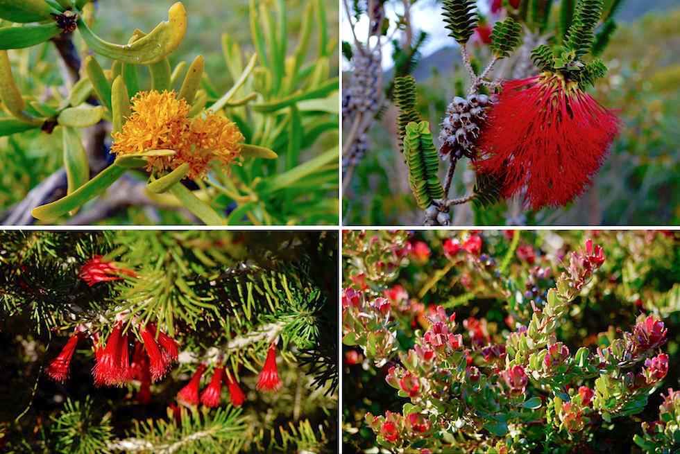 Flora - Fitzgerald River National Park - Western Australia