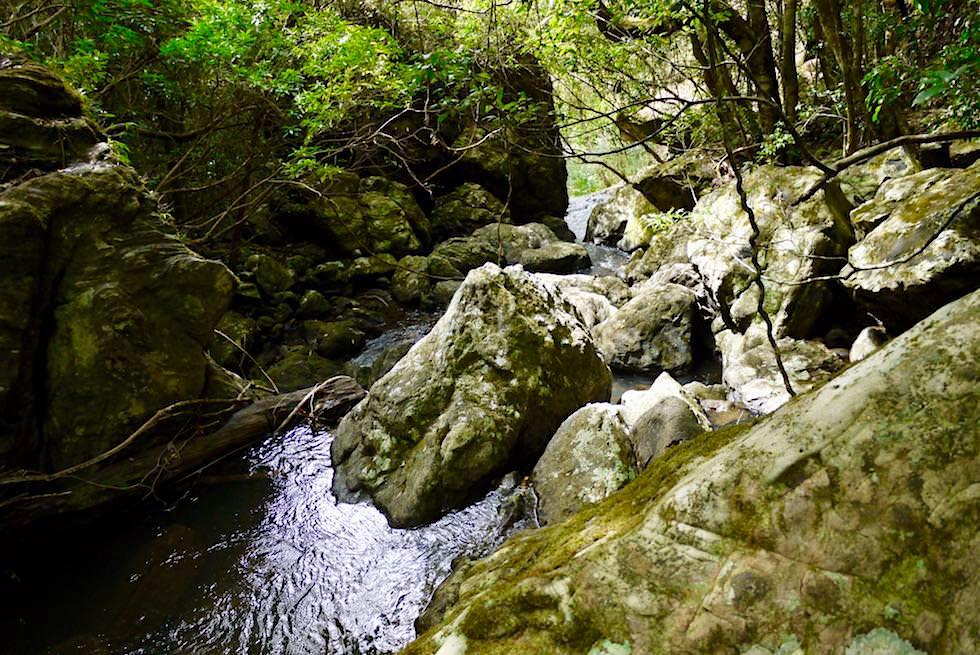 Lohnende Abstecher bei der Twin Falls Wanderung - Springbrook National Park - Queensland