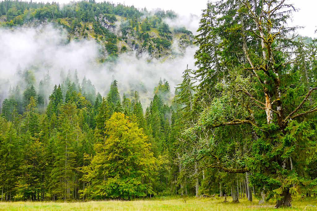 Abstieg Halserspitze - Letztes Stück über Forstweg - Blauberge Wanderung - Bayern