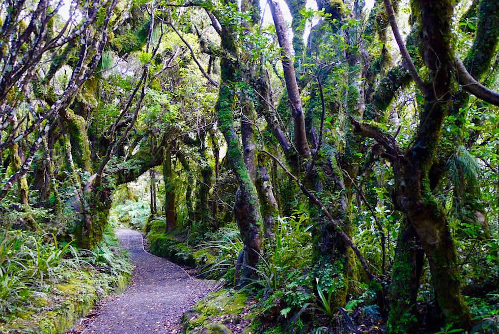 Ein schön angelegter, leichter Weg führt zu den Wilkes Pools - Nordinsel Neuseeland