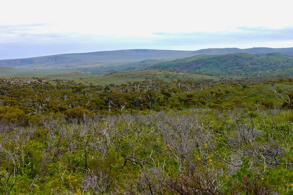 Ausblick Mt Lesueur Wanderung - Western Australia