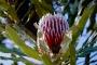 Mount Lesueur National Park – Ein Mekka für Wildblumen Liebhaber!