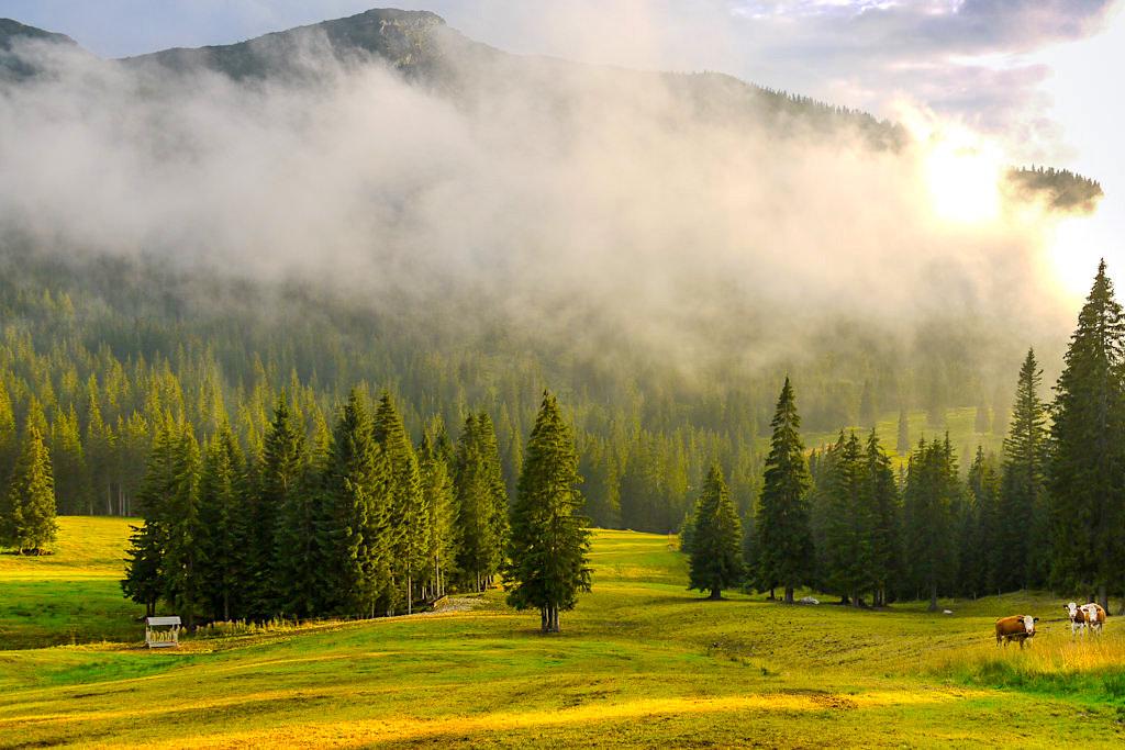 Blauberge Wanderungen - Almwiesen in der Nähe der Gufferthütte - Bayern