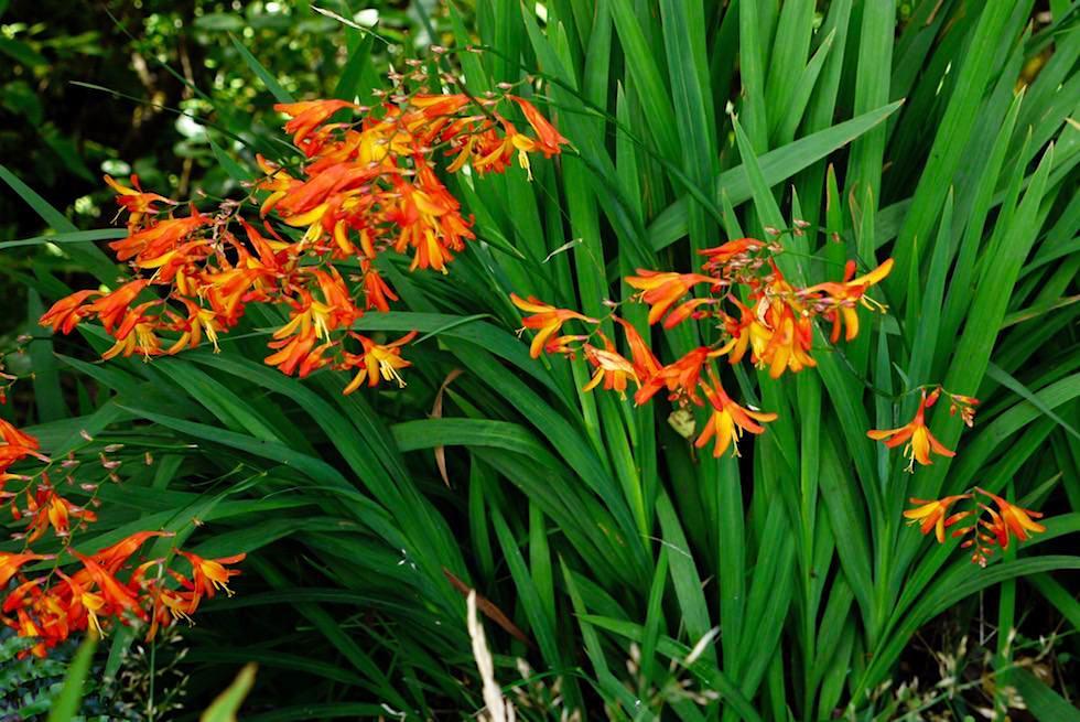 Blumen - Kapuni Loop Track - Nordinsel Neuseeland