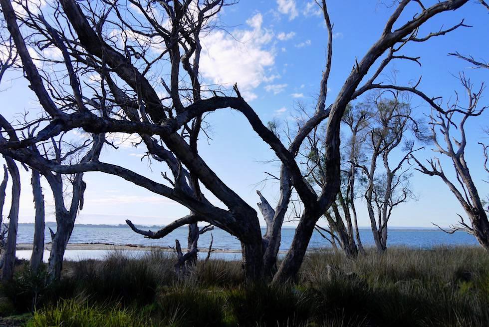 Blick auf Collins Pool - Estuary Hideaway Holiday Park - Western Australia