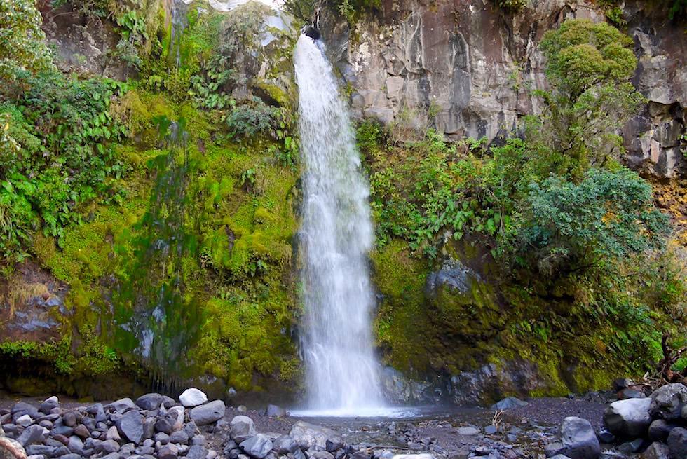 Herrlich grüne Mooswände & Dawson Falls im Egmont National Park - Nordinsel Neuseeland