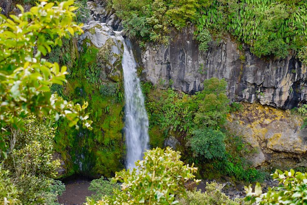 Blick vom Dawson Falls Lookout im Egmont National Park - Nordinsel Neuseeland