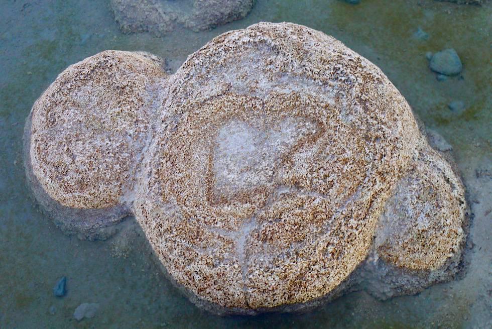 Einzelner Thrombolit - Lake Clifton im Yalgorup National Park nahe Perth - Western Australia
