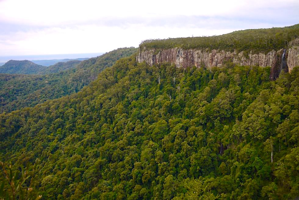 Felswand, Steilklippen, Wasserfall - Canyon Lookout - Springbrook National Park - Queensland