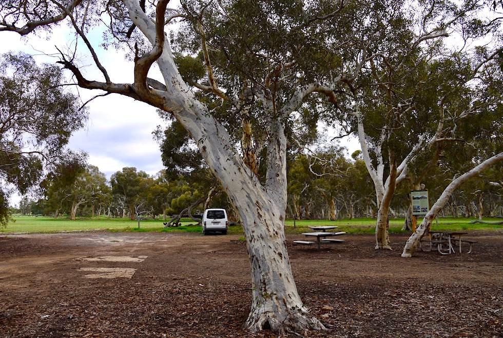 Free Camping - Nahe Lesueur National Park - Western Australia