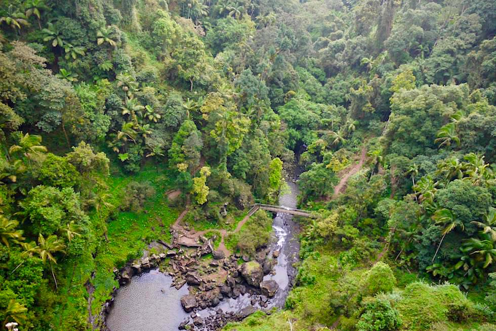 Springbrook national park wasserf lle steilklippen for Boden im regenwald