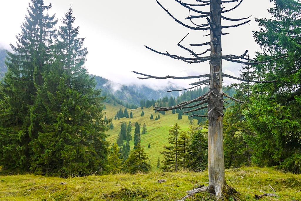 Graseck und Graseck-Kamm - Aufstieg zum Schildenstein - Blauberge-Wnderung - Wildbad Kreuth, Bayern