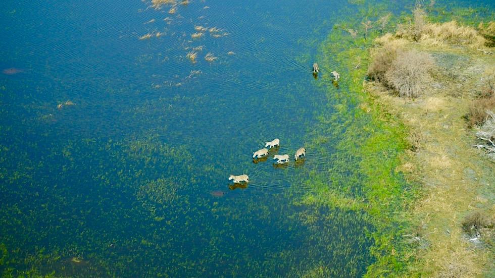Abenteuer & großartiges Erlebnis: Helikopter Flug über das Okavango Delta - Botswana
