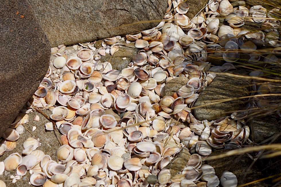 Unmengen von Herzmuscheln gaben Cockle Creek seinen Namen - Südspitze Tasmanien - Tasmania