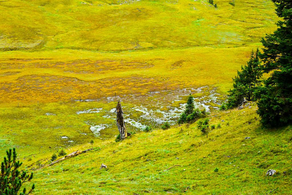 Wunderschöne Hochmoore in der Nähe der Gufferthütte - Blauberge Wanderung: Wildbad Kreuth, Schildenstein, Gufferthütte, Halserspitze - Bayern